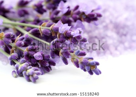 bunch of lavender flower isolated on white close-ups - stock photo