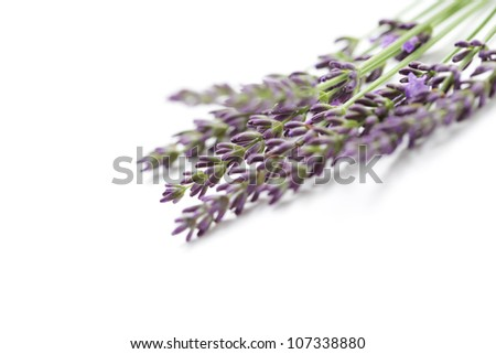 bunch of lavender flowers - flowers and plants