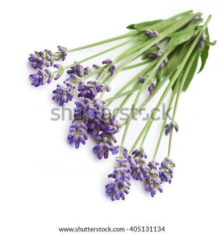 Bunch of lavender flowers isolated on a white background  - stock photo