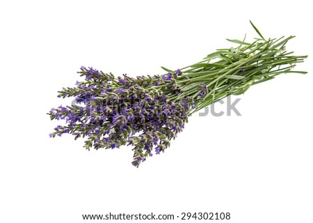 Bunch of lavender flowers over white background. Fresh blossoms