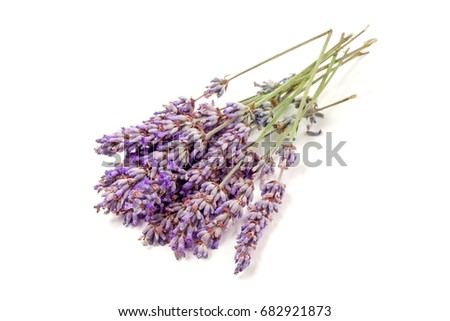 Bunch of lavender isolated on a white background