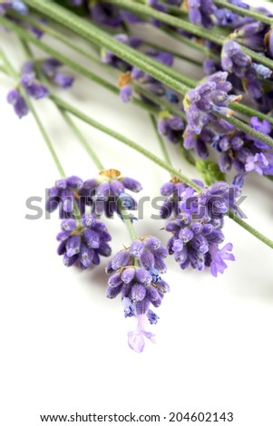 bunch of lavender isolated on white