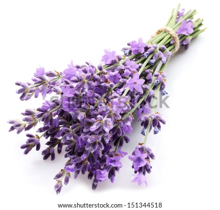 Bunch of lavender on a white background. - stock photo