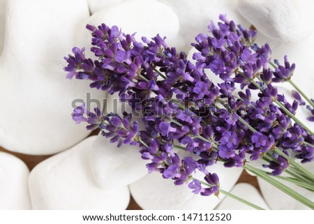 Bunch of lavender on  background with white pebbles - stock photo
