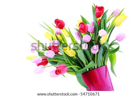 bunch of lovely spring tulips - flower and plants