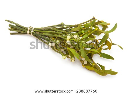 Bunch of mistletoe isolated on a white studio background. - stock photo
