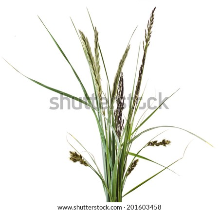 bunch of mix green grass Isolated on white background  - stock photo