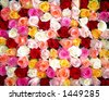 Bunch of multi-colored roses packed tightly together - stock photo