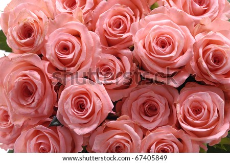 bunch of multiple pink roses - stock photo