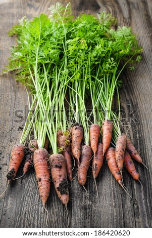 Bunch of orange carrots fresh from garden with dirt on old rustic wood background - stock photo