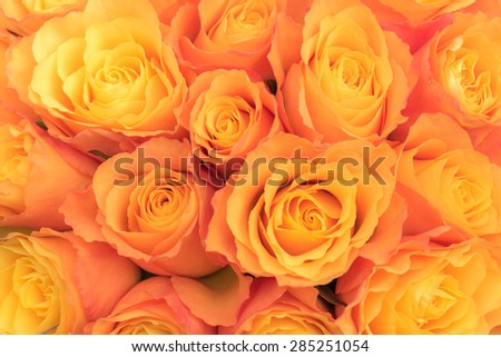 Bunch of orange roses, overhead view - stock photo