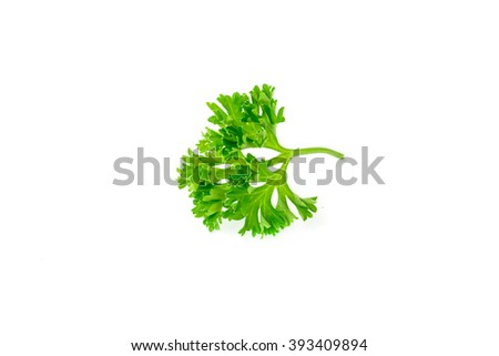 bunch of parsley isolated on a white background - stock photo