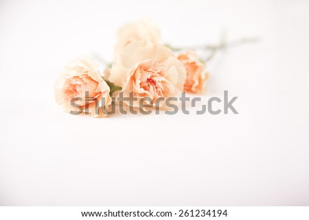 Bunch of peach-colored cloves on white background