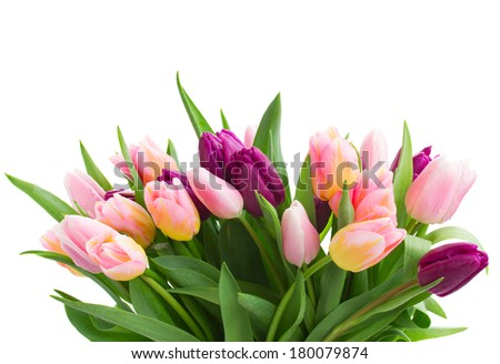 bunch of pink  and violet tulips   isolated on white background - stock photo