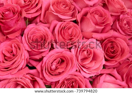Bunch of pink roses as beautiful floral background
