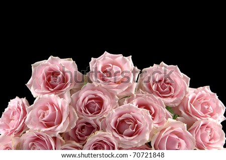 Bunch of pink roses on black ground