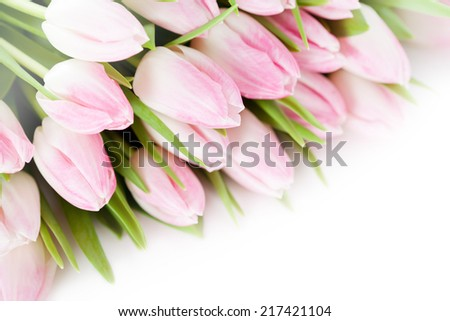 Bunch of pink tulips on white background