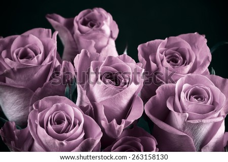 Bunch of purple rose flowers close-up on black background. Shallow DOF. Filtered image. - stock photo