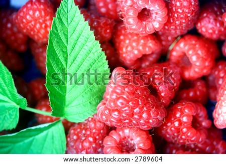 Bunch of raspberries in a punnet freshly picked from the farm, with a stalk of leaf.