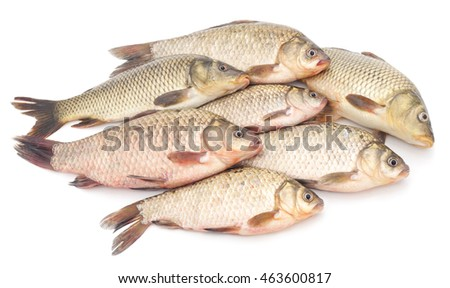 Bunch of raw fish isolated on a white background.