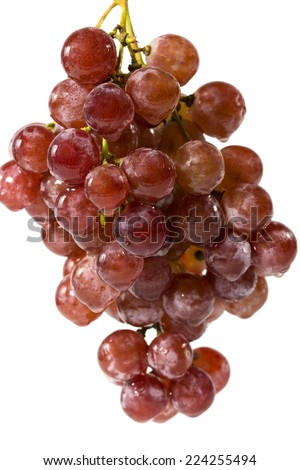 Bunch of red grapes , fresh with water drops Isolated on white background. - stock photo