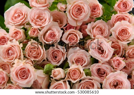 Bunch of roses isolated background