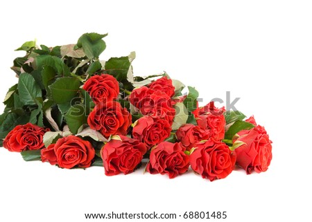 bunch of roses isolated on the white background
