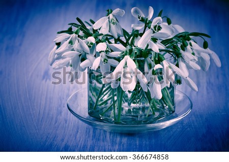 Bunch of snowdrops in glass vase on blue wooden table. Shallow DOF. Filtered cool toned image with vignette. - stock photo