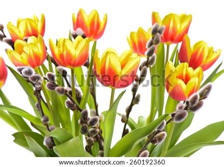 bunch of tulip flowers isolated over white background - stock photo