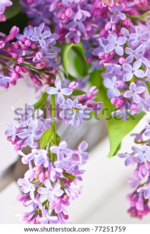 bunch of violet lilac flower - stock photo