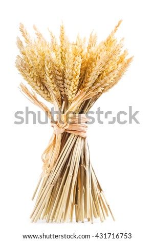 bunch of wheat ears isolated on white background