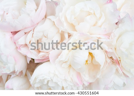 Bunch of white and pink peonies as a background
