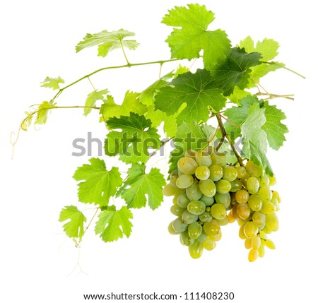 Bunch of white grapes on a vine with green leaves. isolate - stock photo