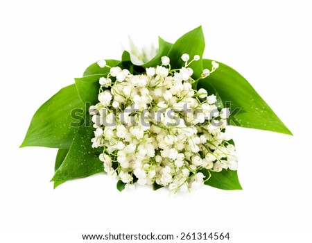 Bunch of white lily of the valley isolation - stock photo