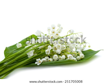 Bunch of white lily of the valley on white background - stock photo