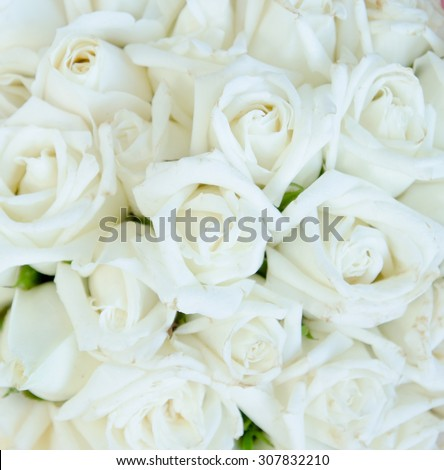Bunch of white rose - stock photo