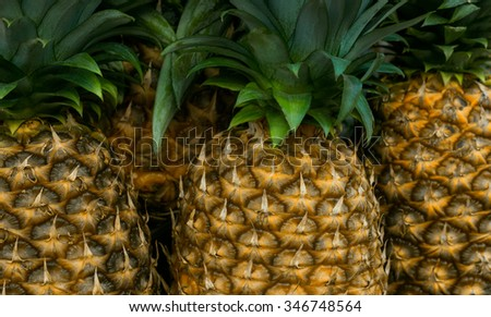 Bunch of whole, ripe pineapples photographed close up. - stock photo