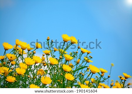bunch of yellow flowers under a shining sun - stock photo