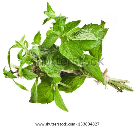 Bunch Oregano or Marjoram Herb (origanum majorana ) isolated on white background