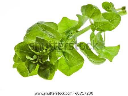bunch spinach isolated on white