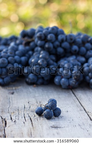 Bunches of dark grapes on a wooden table
