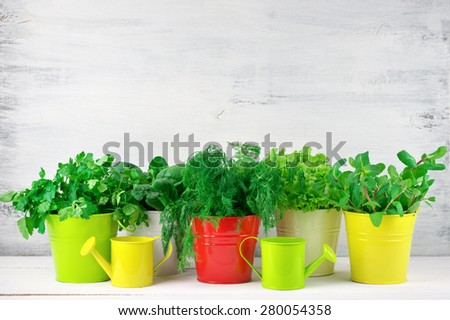 Bunches of flavoring greens, lettuce and spinach in colorful metallic buckets with watering cans on rustic wooden background. - stock photo