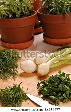 Bunches of fresh green onions, dill and parsley lay on the table in front of 3 Terra Cotta pots of fresh herb plants.