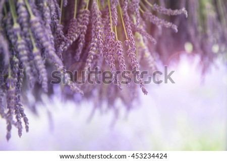 Bunches of fresh lavender hanging to dry in the sunshine. Selective focus and intentional lens flare. Space for your text.  - stock photo