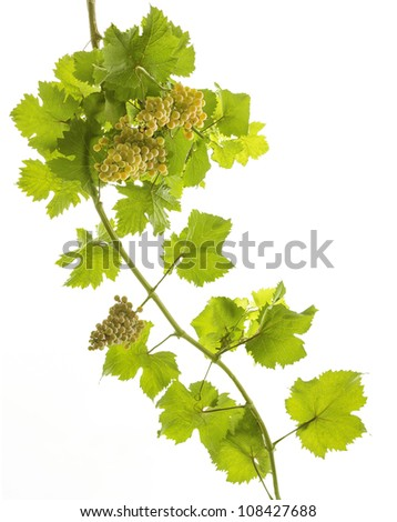 bunches of grapes on white background - stock photo