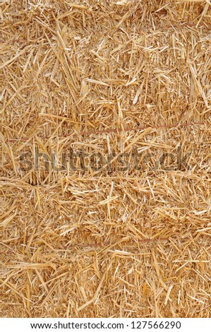 bunches of hay under sunny - stock photo