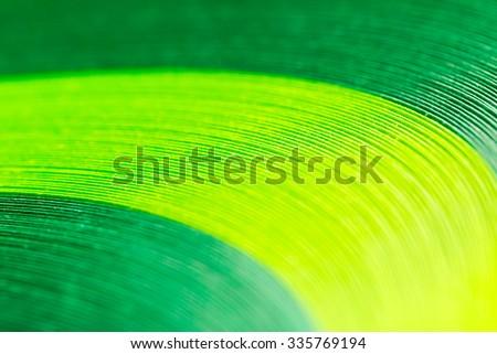 bundle green paper ribbons on a white background. Macro lens closeup shot 1:1 - stock photo