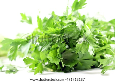 Bundle of fresh Italian parsley - isolated studio shot