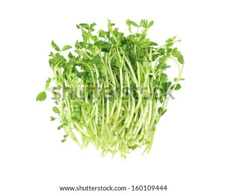 Bundle Of Fresh Pea Sprouts Lying On White Background - stock photo