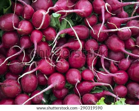 Bundle of fresh radishes on farmer market  - stock photo